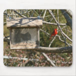Squirrel in the Feeder Mousepad