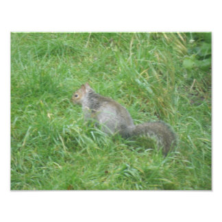 Squirrel in the Grass Photo