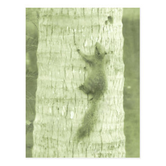 Squirrel In The Park Postcard