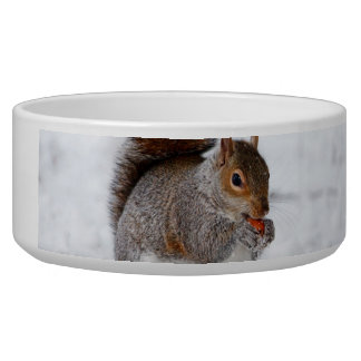 Squirrel in the snow bowl