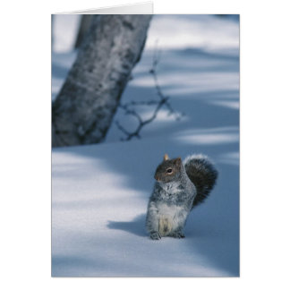 Squirrel in the Snow Card