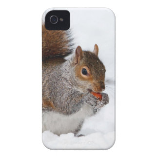 Squirrel in the snow Case-Mate iPhone 4 case