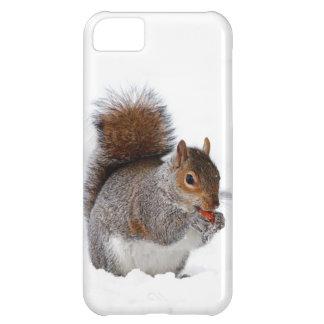 Squirrel in the Snow Cover For iPhone 5C
