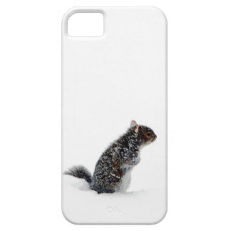 Squirrel in the Snow iPhone 5 Cases