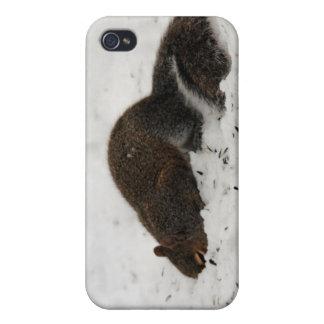Squirrel In The Snow iPhone 4 Case