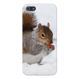 Squirrel in the snow iPhone 5 covers