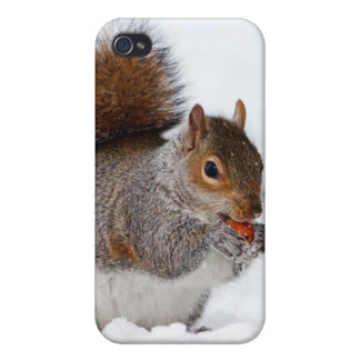 Squirrel in the snow iPhone 4 cover