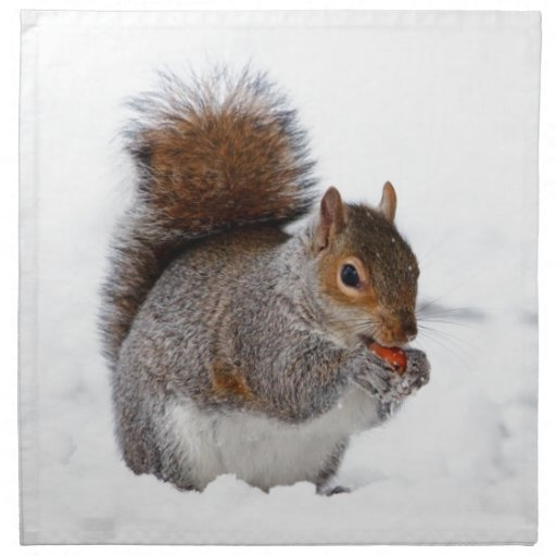 Squirrel in the Snow Napkins