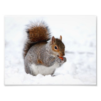 Squirrel in the snow photo art