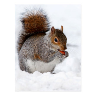 Squirrel in the snow postcard