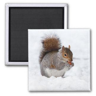 Squirrel in the Winter 2 Inch Square Magnet