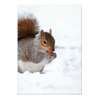 Squirrel in the Winter Card