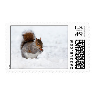 Squirrel in the Winter Postage Stamps