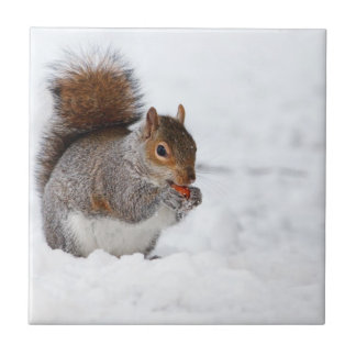 Squirrel in the Winter Tiles