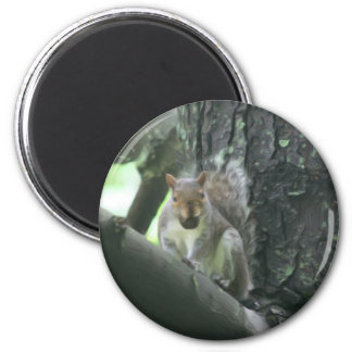 Squirrel In Tree Animal Art Magnet