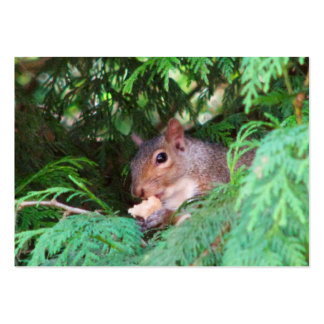 Squirrel In Tree Large Business Cards (Pack Of 100)