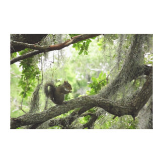 Squirrel in Tree Canvas Print