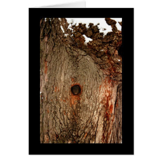 Squirrel in Tree Greeting Cards