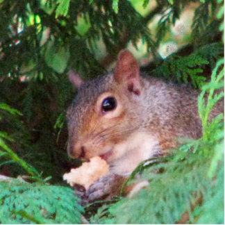 Squirrel In Tree Cutout