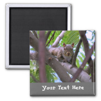 Squirrel in Tree Fridge Magnet Magnets