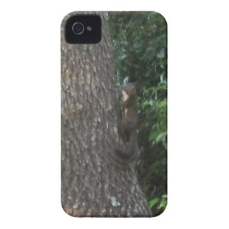 squirrel in tree iPhone 4 case