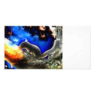 Squirrel In tree Pop Art Style Photo Cards