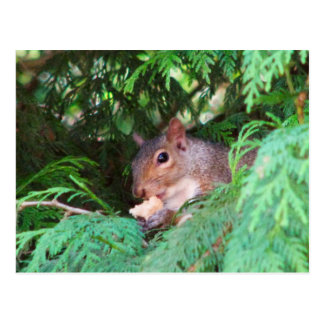 Squirrel In Tree Postcard