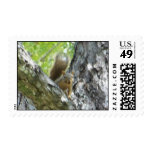 squirrel in tree stamp