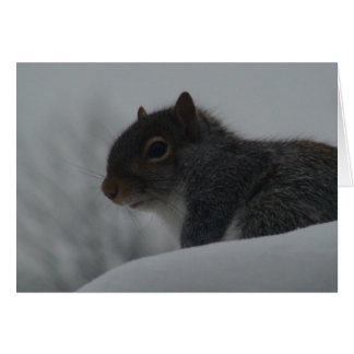 Squirrel in winter card