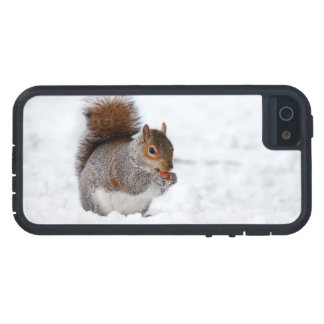 Squirrel In Winter  iPhone 5 Case