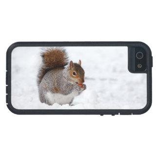 Squirrel In Winter  iPhone 5 Case