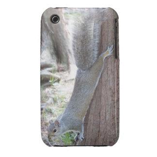 Squirrel iPhone 3 case