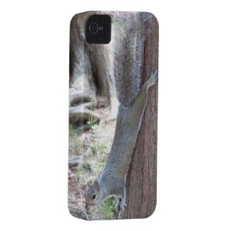 Squirrel iPhone 4 case