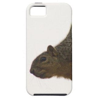 Squirrel iPhone 5 Case