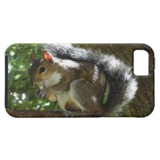 Squirrel iPhone Case iPhone Case