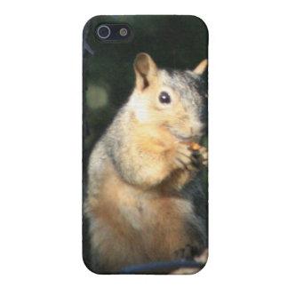 Squirrel iPhone SE/5/5s Cover