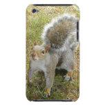 Squirrel iPod Case-Mate Cases