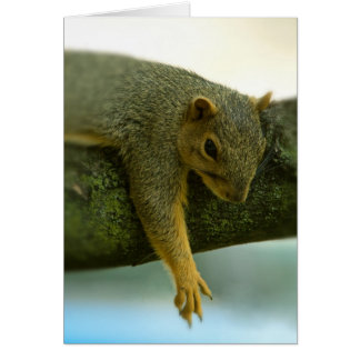 Squirrel just hanging out in tree card