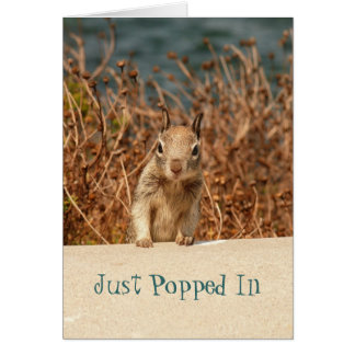 Squirrel Just Popped In Cards