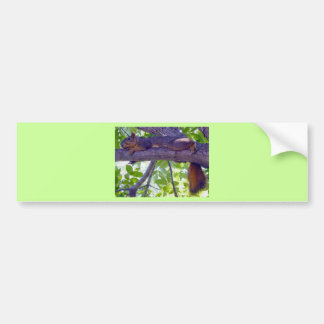 Squirrel laying on a tree branch photo car bumper sticker