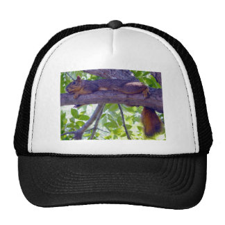 Squirrel laying on a tree branch photo trucker hat