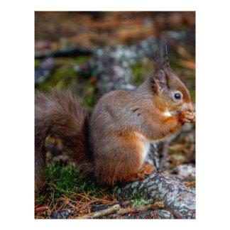 Squirrel Letterhead