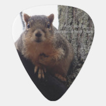 Squirrel looking at your guitar pick