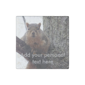 Squirrel looking at your marble magnets