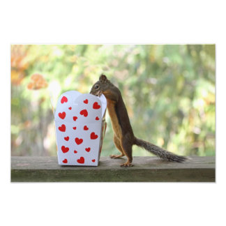 Squirrel Looking Inside Heart Box Photo Print