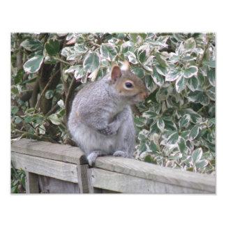 Squirrel Looking Sideways Photo Print