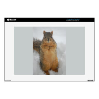 Squirrel Love Laptop Decal