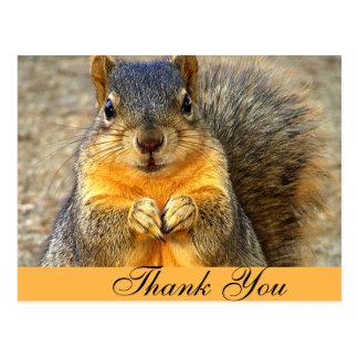 Squirrel Love_ Postcard