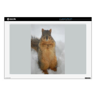 Squirrel Love Decals For Laptops