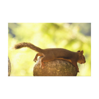 Squirrel Lying Down Photo Gallery Wrapped Canvas